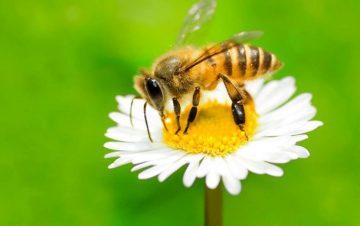 Quarantine Conversations – Honey Day